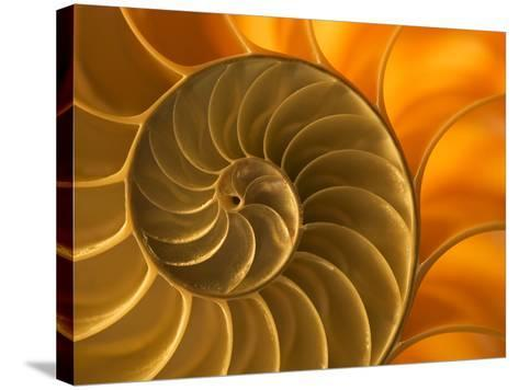 Nautilus Shell, South Pacific Ocean-Frans Lanting-Stretched Canvas Print