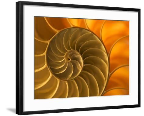 Nautilus Shell, South Pacific Ocean-Frans Lanting-Framed Art Print