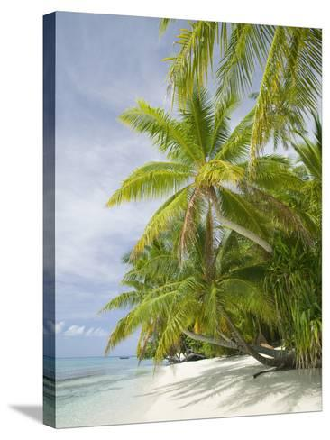 Palms on a Tropical Beach on the Funafuti Atoll in Tuvalu-Ashley Cooper-Stretched Canvas Print