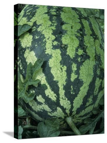 A Ripe Sweet Favorite Variety Watermelon-Wally Eberhart-Stretched Canvas Print