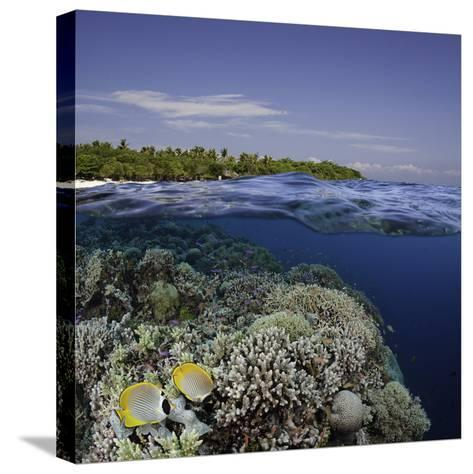 Philippine Pangalo Reef Scene with Butterflyfish and Balicasag Island, Digital Composite-David Fleetham-Stretched Canvas Print