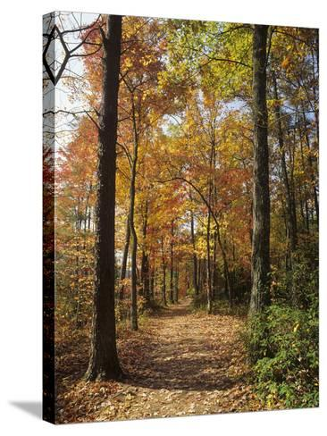 Pathway Through an Autumn Deciduous Forest, Red River Gorge Geological Area-Adam Jones-Stretched Canvas Print