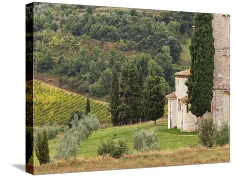 Vineyard and St. Antimo Abbey, Near Montalcino, Italy, Tuscany-Adam Jones-Stretched Canvas Print