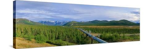 Trans Alaska Oil Pipeline Just South of the Brooks Range-Paul Andrew Lawrence-Stretched Canvas Print