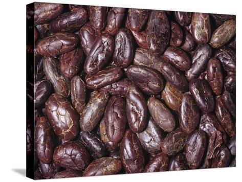 Raw, Whole Cacao Beans, the Source of Chocolate (Theobroma Cacao)Native to Tropical South America-Ken Lucas-Stretched Canvas Print