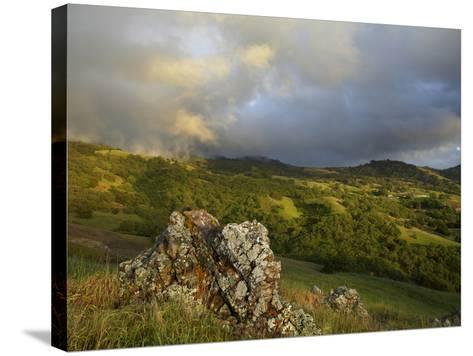Mist on the Slope of Mt. Diablo After A Late Winter Storm, Central California, USA-Patrick Smith-Stretched Canvas Print