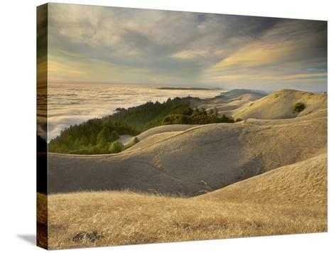 Fog over San Francisco Bay Seen from the Top of Mt. Tamalpais, California, USA-Patrick Smith-Stretched Canvas Print