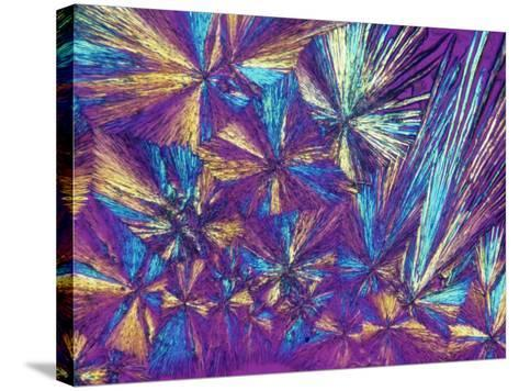 Polarized View of Naprosyn, a Drug Used for Treating Pain and Inflammation, LM X50-Arthur Siegelman-Stretched Canvas Print