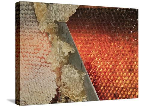 Small Honey Producers Still Use the Uncapping Knife to Prepare the Bee Hive Frames-Eric Tourneret-Stretched Canvas Print
