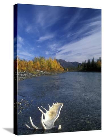 Moose Antler in the Hunts River, Brooks Range, Kobuk National Park, Alaska, USA-Tom Walker-Stretched Canvas Print