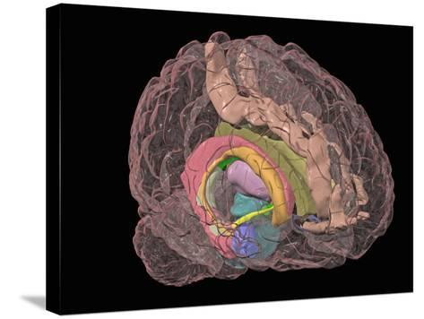 Human Brain Showing the Limbic System-Arthur Toga-Stretched Canvas Print