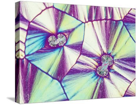 Vitamin C or Ascorbic Acid Crystals, Polarized, LM X16-Gladden Willis-Stretched Canvas Print