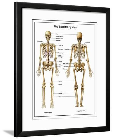 Full-Body Anterior and Posterior Anatomy of the Human Skeletal System-Nucleus Medical Art-Framed Art Print