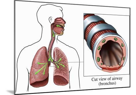 Illustration of the Airways to the Lungs, Including the Trachea and Bronchi-Nucleus Medical Art-Mounted Giclee Print