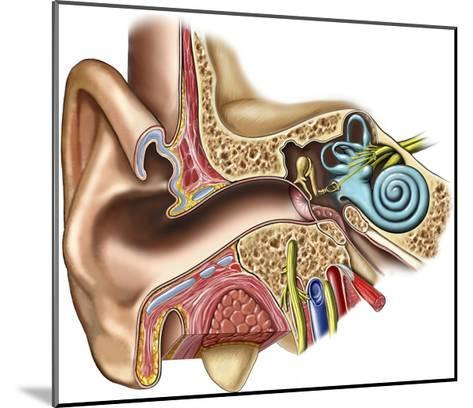 The Anatomy of the Outer, Middle and Inner Ear from an Anterior (Front) Coronal (Cut-Away)-Nucleus Medical Art-Mounted Giclee Print