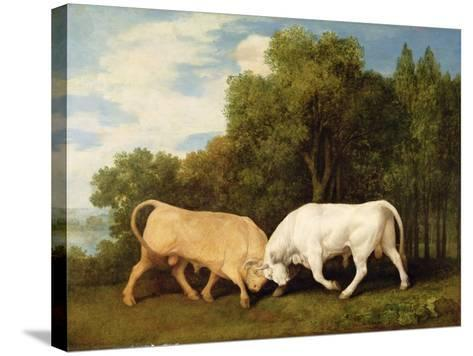 Bulls Fighting, 1786 (Oil on Panel)-George Stubbs-Stretched Canvas Print