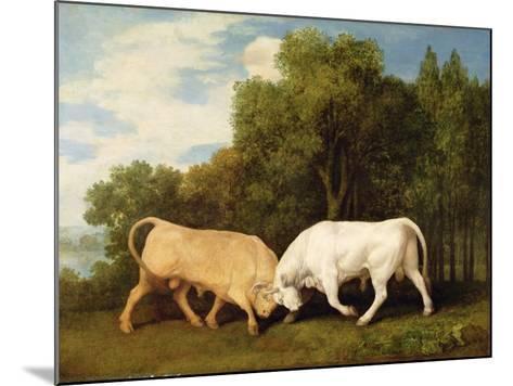 Bulls Fighting, 1786 (Oil on Panel)-George Stubbs-Mounted Giclee Print
