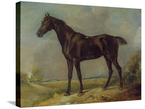 Golding Constable's Black Riding-Horse, C.1805-10 (Oil on Panel)-John Constable-Stretched Canvas Print