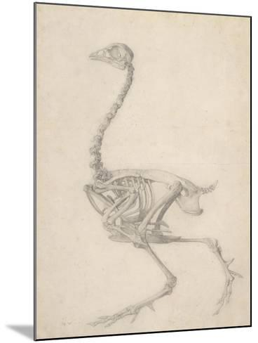 The Skeleton of a Fowl-George Stubbs-Mounted Giclee Print
