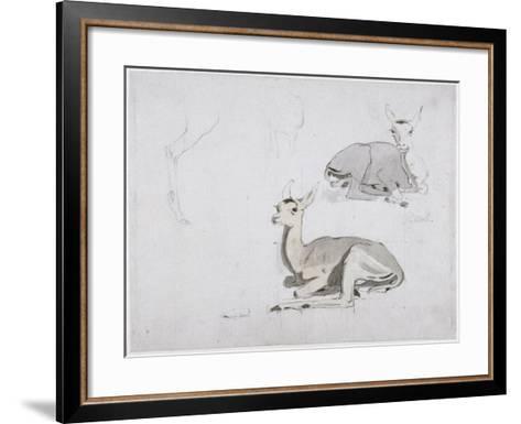 Studies of Young Pallah Deer Resting, C.1802 (W/C and Graphite on Paper)-Samuel Daniell-Framed Art Print