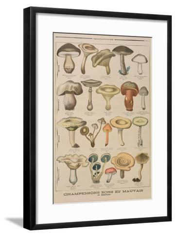 Good and Bad Mushrooms, Illustration from the Illustrated Supplement of Le Petit Journal-French-Framed Art Print