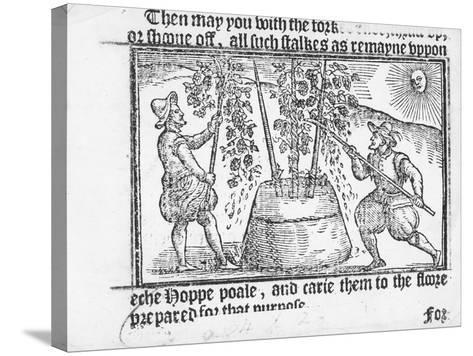 Hop Cultivation, from 'Vade Mecum, a Perfite Platform of a Hoppe Garden' by Reynolde Scot, 1576-English-Stretched Canvas Print