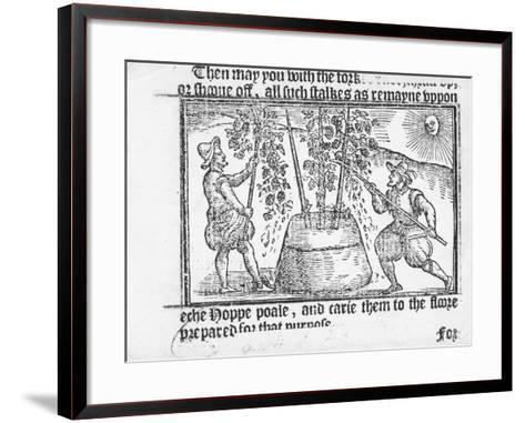 Hop Cultivation, from 'Vade Mecum, a Perfite Platform of a Hoppe Garden' by Reynolde Scot, 1576-English-Framed Art Print