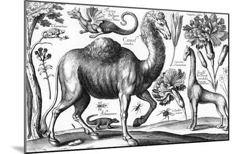 Animalium, Ferarum Et Bestiarum, Engraved by David Loggan, 1663 (Engraving)-Wenceslaus Hollar-Mounted Giclee Print