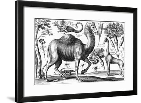 Animalium, Ferarum Et Bestiarum, Engraved by David Loggan, 1663 (Engraving)-Wenceslaus Hollar-Framed Art Print