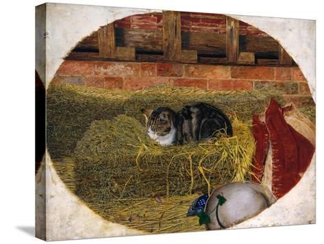 Catnap, 1858-Rosa Brett-Stretched Canvas Print