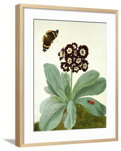 Primula Auricula with Butterfly and Beetle (Gouache over Pencil on Vellum)-Matilda Conyers-Framed Art Print