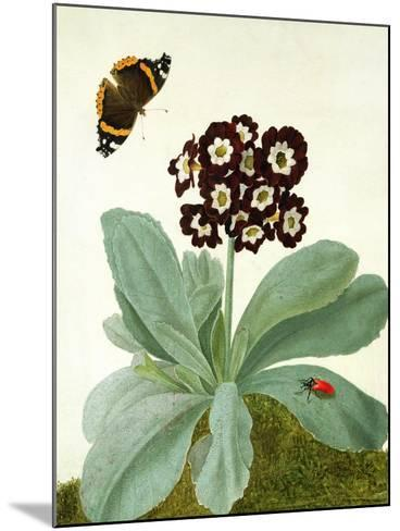 Primula Auricula with Butterfly and Beetle (Gouache over Pencil on Vellum)-Matilda Conyers-Mounted Giclee Print