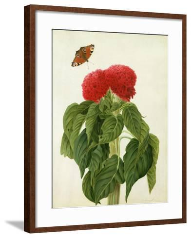 Celosia Argentea Cristata and Butterfly (W/C and Gouache over Pencil on Vellum)-Matilda Conyers-Framed Art Print