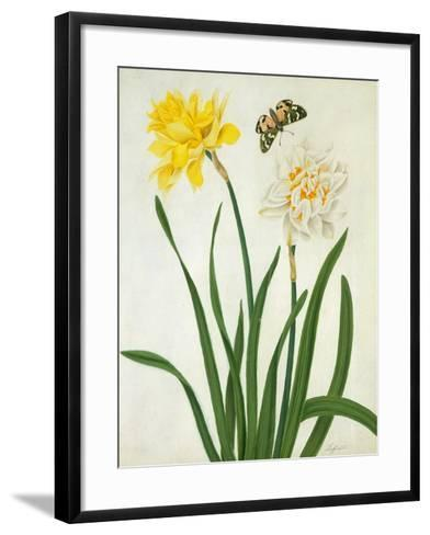 Narcissi and Butterfly (W/C and Gouache with Gold over Pencil on Vellum)-Matilda Conyers-Framed Art Print