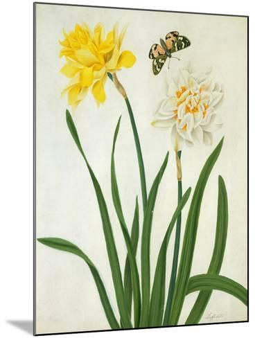 Narcissi and Butterfly (W/C and Gouache with Gold over Pencil on Vellum)-Matilda Conyers-Mounted Giclee Print