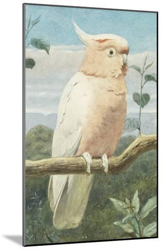 A Leadbetter's Cockatoo (W/C)-Henry Stacey Marks-Mounted Giclee Print