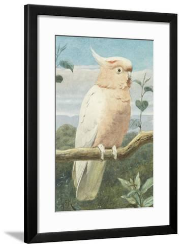 A Leadbetter's Cockatoo (W/C)-Henry Stacey Marks-Framed Art Print
