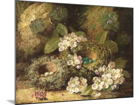 Primroses and Bird's Nests on a Mossy Bank, 1882-Oliver Clare-Mounted Giclee Print