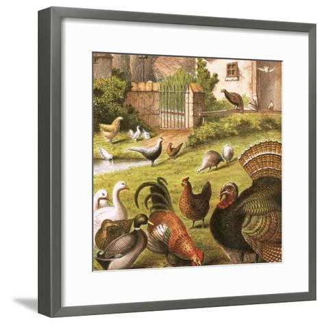 Poultry at a Farm-English-Framed Art Print