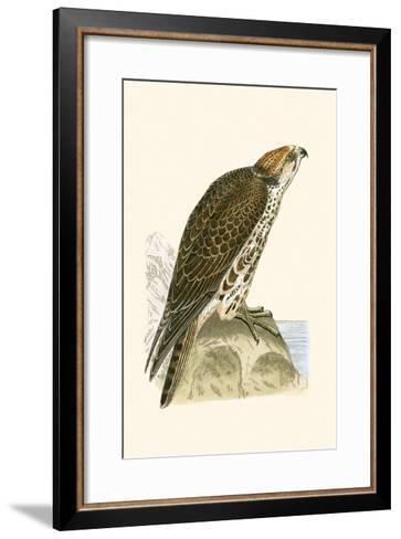Saker Falcon,  from 'A History of the Birds of Europe Not Observed in the British Isles'-English-Framed Art Print