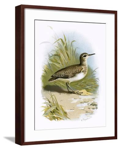 Sandpiper-English-Framed Art Print