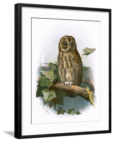 Tawny Owl-English-Framed Art Print