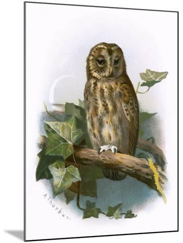Tawny Owl-English-Mounted Giclee Print