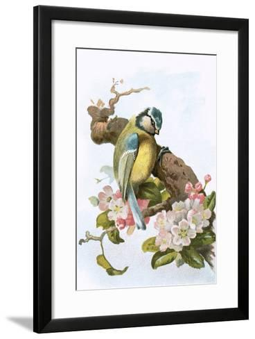 Blue Tit-English-Framed Art Print