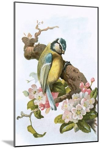 Blue Tit-English-Mounted Giclee Print