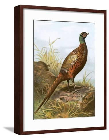Pheasant-English-Framed Art Print