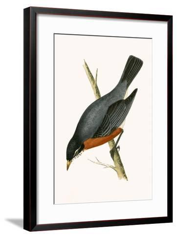 Red Breasted Thrush,  from 'A History of the Birds of Europe Not Observed in the British Isles'-English-Framed Art Print