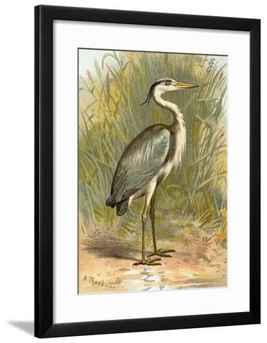 Heron-English-Framed Art Print