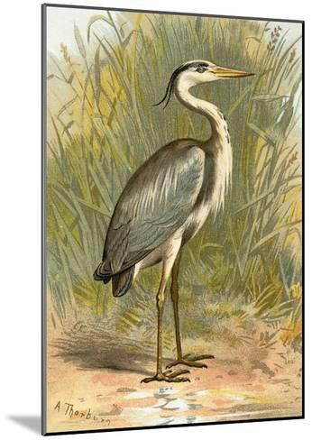 Heron-English-Mounted Giclee Print
