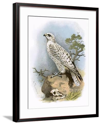Gyr-Falcon-English-Framed Art Print